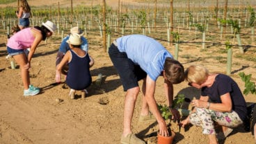 PGA Catalunya Resort - Celler Mas Hereu_vine planting