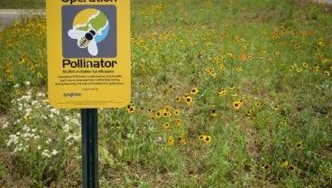 pollinators_sign