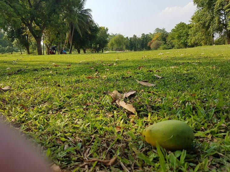 Yay Tagon Taung turf edible golf courses