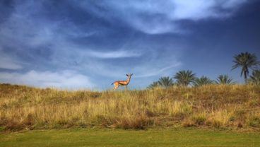Troon Abu Dhabi Gazelle at Saadiyat