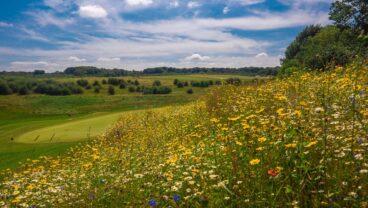 Farleigh Golf Club Operation Pollinator program 2021 Syngenta